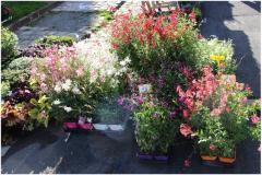 (3) Entre Cours & Jardins